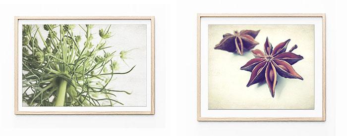 Lupen Grainne nature photography of botanical elements